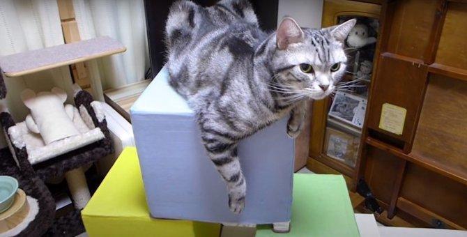 立派な猫ちゃんのお城!老朽化で泣く泣く処分に…