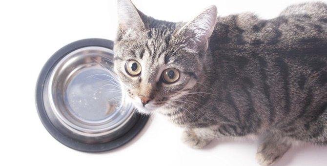 ドライフードを食べない猫…偏食が直るまでのお話