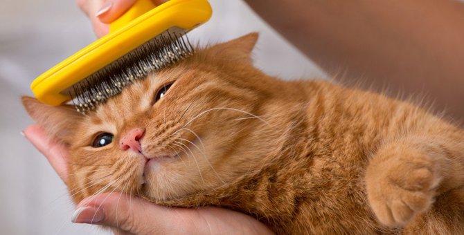 猫にスリッカーブラシを使う時の注意点2つ!使い方やおすすめ商品まで