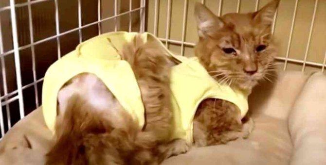 頬がえぐれガリガリに痩せた猫…温かいお家で余生を過ごす No.1