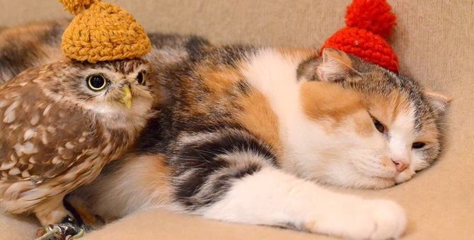 フクロウがいる猫カフェ!スタッフの紹介と利用方法