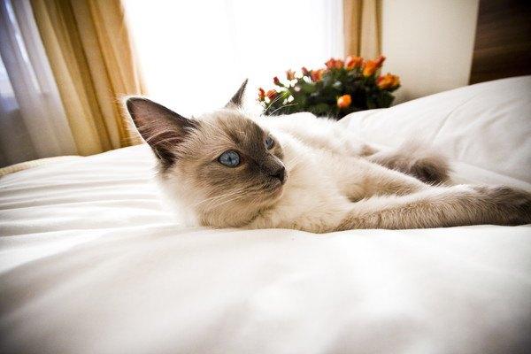 【世界にゃん事情】フランス トゥルーズの猫たち
