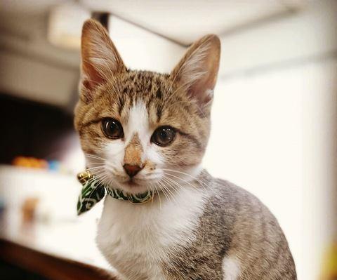猫が好感を持っている人に見せる仕草3つ