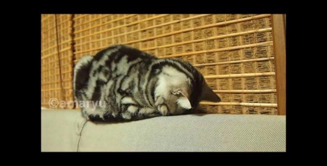 たまらなく可愛い!猫のごめん寝動画