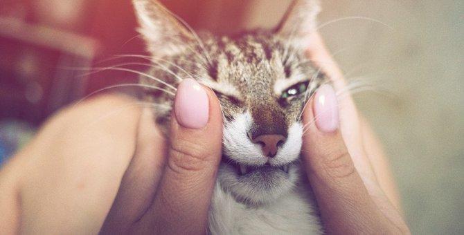 猫を分かっていない飼い主がしがちなNG行為5つ