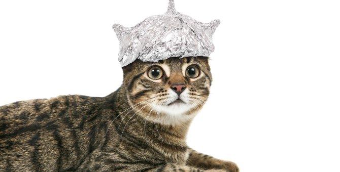 猫がアルミホイルを嫌う2つの理由と活用法