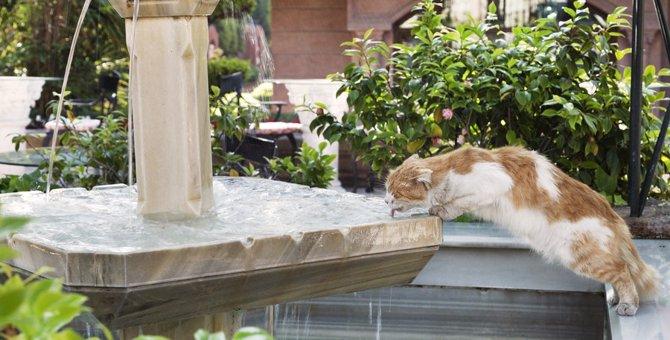 猫が飲んでも良い・悪い「ミネラルウォーター」の特徴