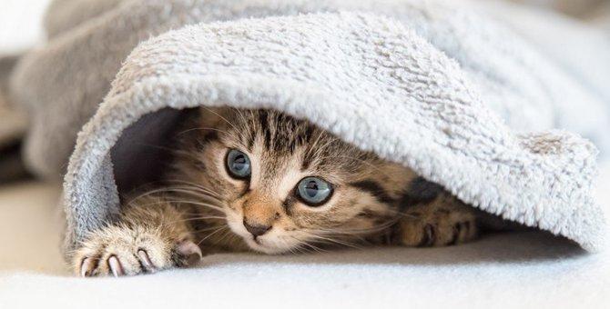 猫がいない!家の中で猫を探す4つの方法