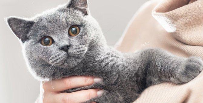 猫の目の色と色彩感覚