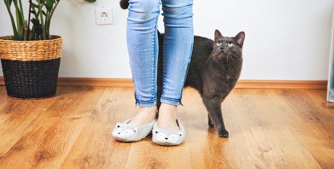 猫が足元にスリスリする、座る、寝る、転がる!これってどんな意味?