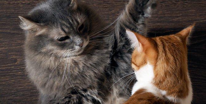 猫の怒りのサインとその時の4つの理由