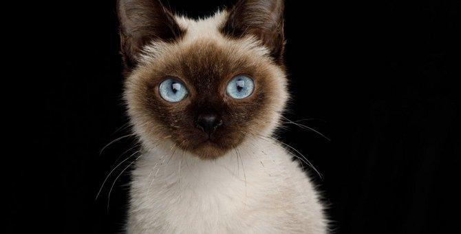 めったに見かけない!珍しい猫種4選