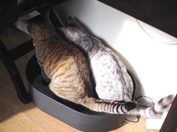 猫が使いにくいトイレとその理由3つ