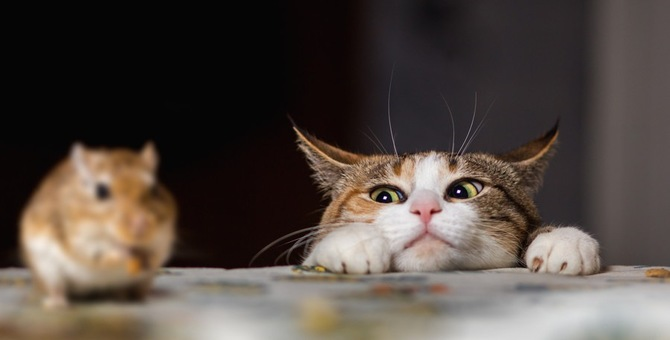 猫がネズミを狩る理由とその際の注意する点