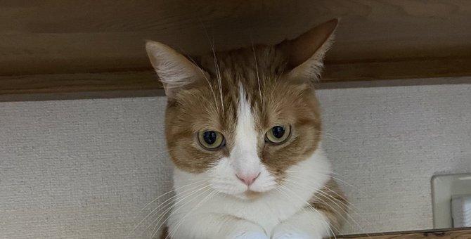 猫が飼い主に『バレないように』していること3つ