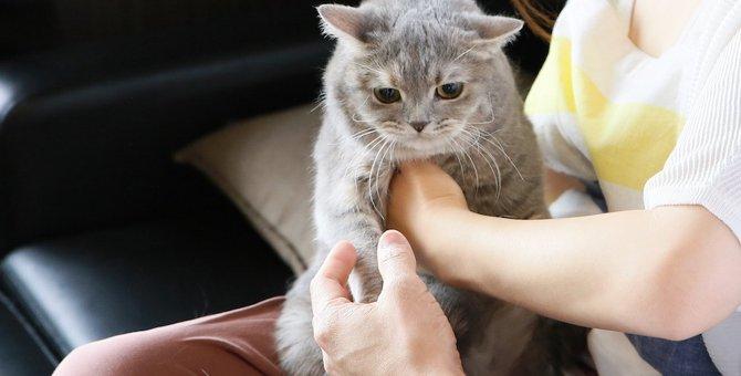 猫に嫌われる10の行動