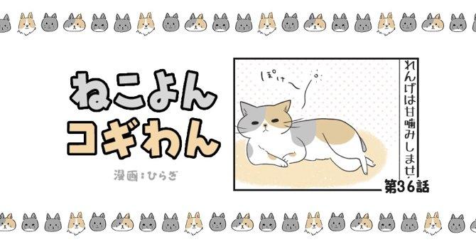 ねこよんコギわん【第36話】「れんげの甘噛み」