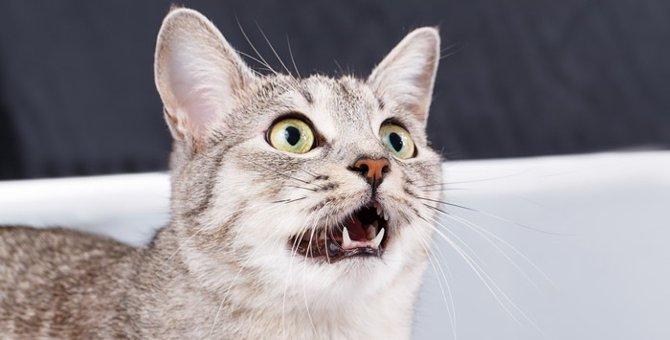臭いを嗅いだ猫が変な顔をする理由とその心理
