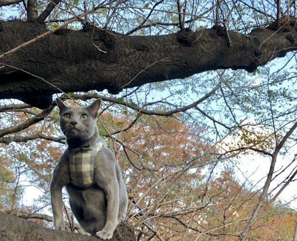 筋肉ムキムキ!猫たちの美しい美ボディーをご堪能あれ
