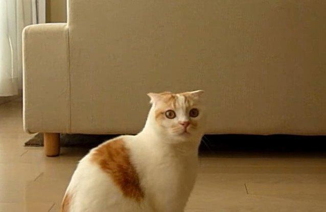 ヒモで激しく遊ぶ猫さん!しかし…