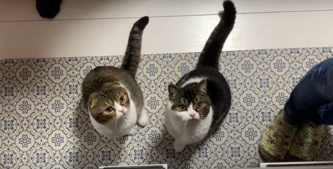 生まれて半年♡お祝いに初めてウェットフードを食べる子猫