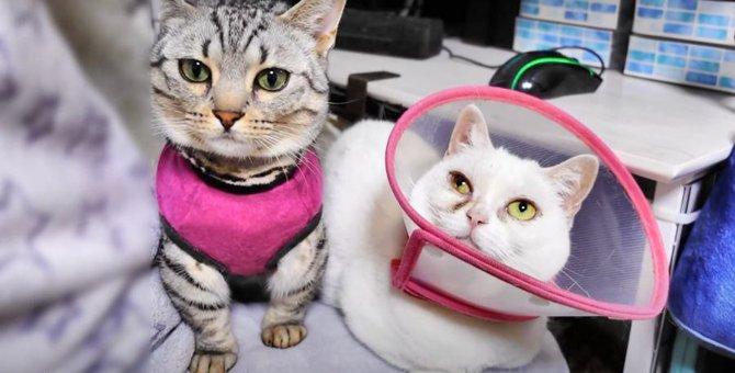 飼い主さんの膝の上に相乗りする可愛い猫たち♪