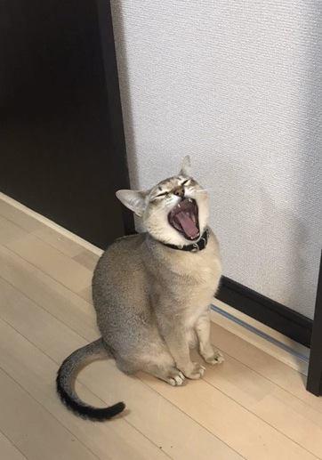 猫がミスをごまかすときの仕草3つ