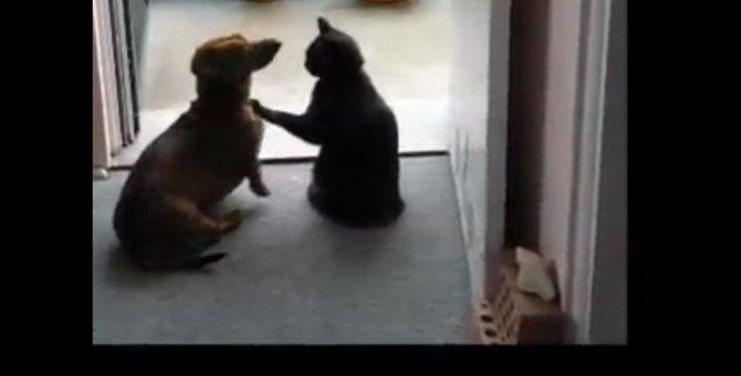 「それやめい!」一瞬でワンちゃんを静める猫ちゃん