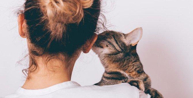 猫から飼い主に感謝を伝えている10の仕草