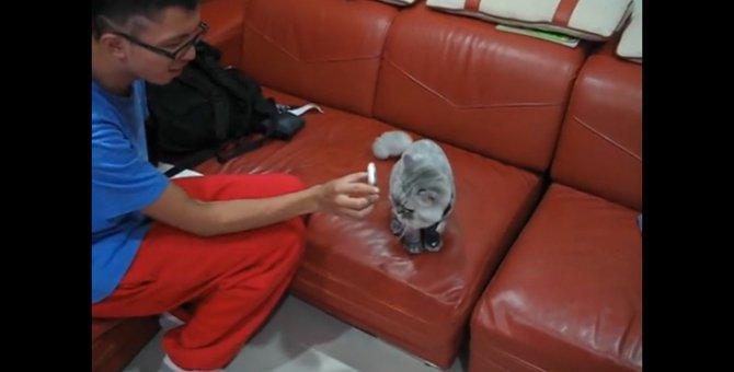 猫ちゃんに電話を見せると…「もしもし?にゃーです!」
