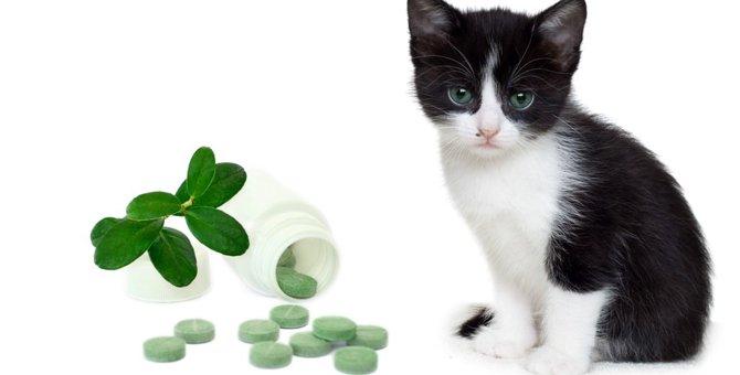 猫の免疫力を上げるサプリメントの選び方!おすすめ商品3選