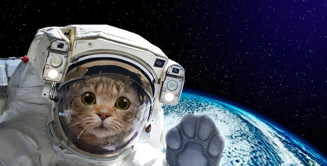 宇宙猫の画像8連発!ついに商品化した物まで