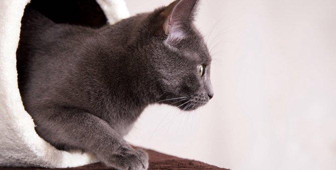 猫は気まぐれ?5つの仕草と本当の意味