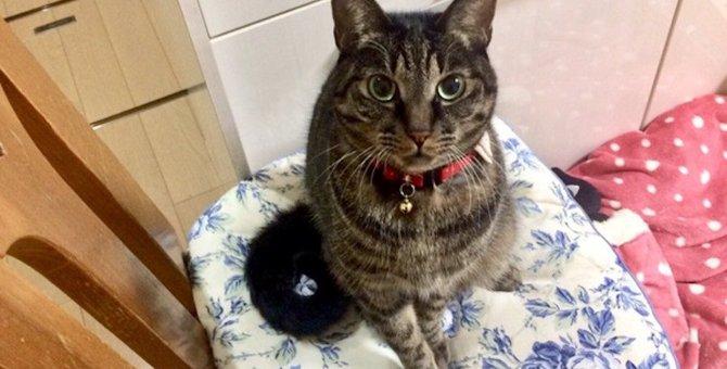 【たまらん】猫が飼い主を誘惑してくるタイミング3つ【作業中断】