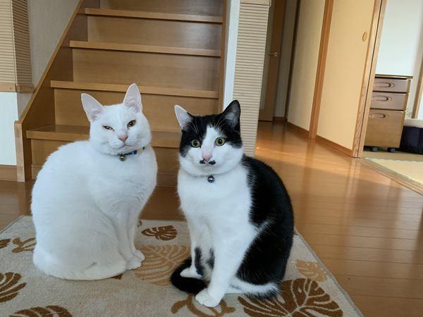 猫が玄関でお出迎えしてくれる心理5つ
