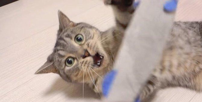オモチャを狙う猫ちゃんの姿をスローで楽しむ