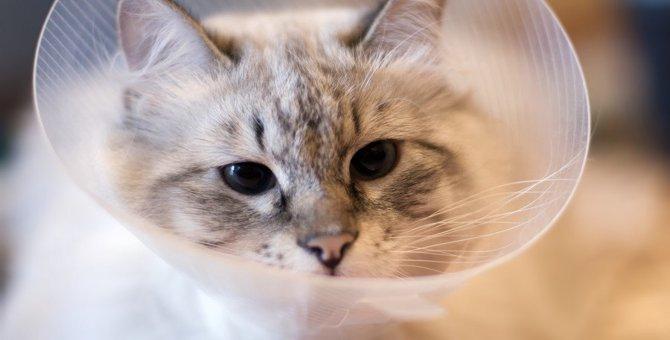 柔らかい猫のエリザベスカラーおすすめ10選