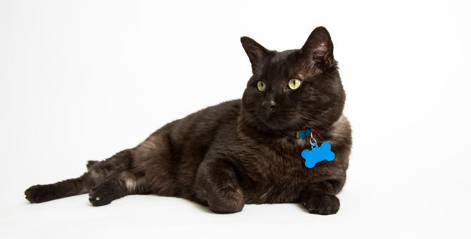 猫の迷子札 タイプ別にみる利点・注意する事