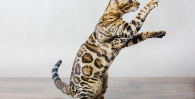 猫が立つ理由とその時考えられる病気