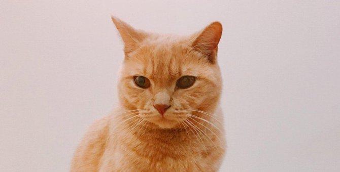 新入りが嫌い?先住猫の驚きの過去世とは!|Laylaのペットリーディング