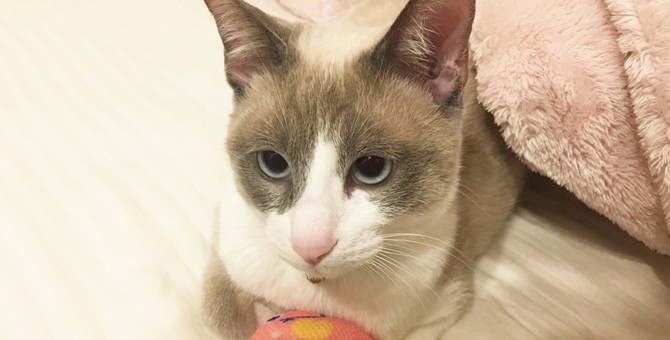 猫がおもちゃで遊ばなくなってしまう理由5つ