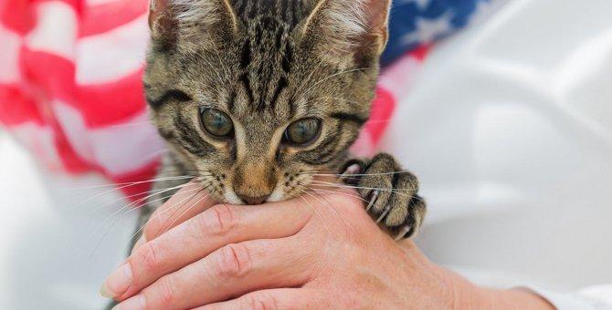 猫が人に噛みつくときの5つの理由