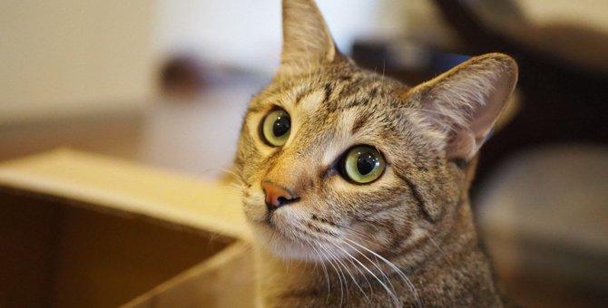 猫のお世話を友人やシッターさんに頼む時の注意事項4つ