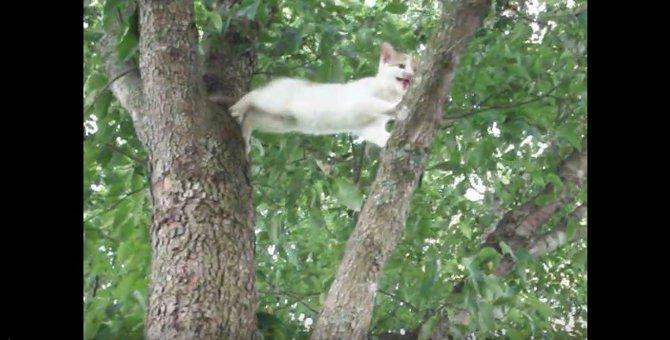 仔猫が木から降りれなくなった!その時母猫の取った行動とは…?