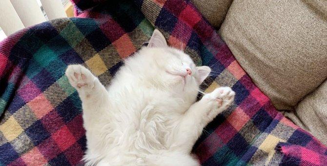 猫を「飼う前」と「飼った後」で変わる8つの生活