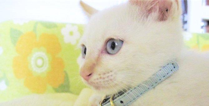 虐待から救えなかった…後悔の念が背中を押してくれた愛猫との出会い