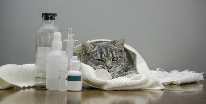 猫の白血病の感染力は『弱い』どんな事でうつるの?