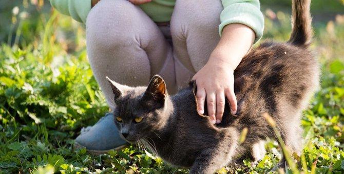 猫はおしりや腰をトントンされるのが好き!これってどうして?
