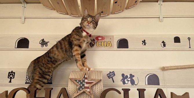 猫を『人間の子供』のように扱ってしまうシーン4選