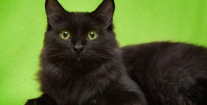 黒猫が横切ると縁起が悪い?縁起のいい話